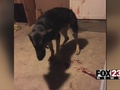 VIDEO: Rogers County woman wants Sheriff's Office to pay after shooting dog, leaving note