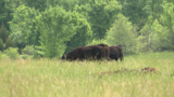 Warrant issued for cattle theft suspect in Rogers County