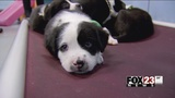Tulsa animal shelters face problems with growing puppy population