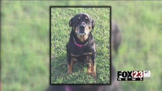 Inola family seeks justice after someone shoots, kills dog on front porch