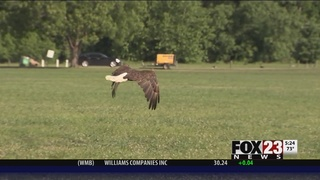 Rescued eagle released