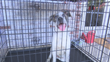 Texas animals moving out of Tulsa shelters