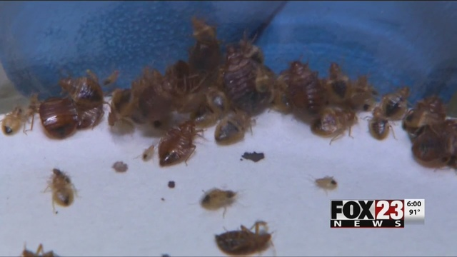 Oklahoma Bed Bug Troubles: The Latest | FOX23
