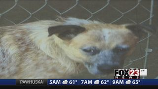 VIDEO: Animal rescue group concerned after hoarding investigation at Skiatook home