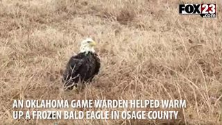 Oklahoma eagle ices over in storm