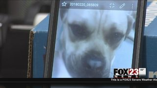 Tulsa dog euthanized after being shot