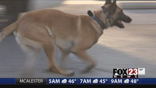 Police dog catches Sapulpa chase suspect