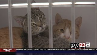 VIDEO: Tulsa pet owners reminded to get their pets registered