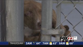 Muskogee Animal Shelter struggles with number of dogs left unadopted
