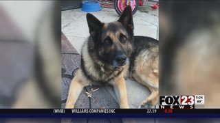Tulsa Police K9 dies of cancer