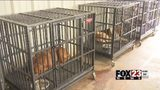 VIDEO: Humane Society of Tulsa rescue crisis