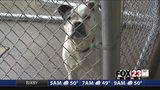 VIDEO: Mayor Bynum introduces new Animal Welfare plan to decrease euthanasia rates
