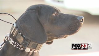 Creek County deputies welcome unique K9 officer