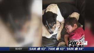 Deputies search for person who fatally shot Muskogee dog