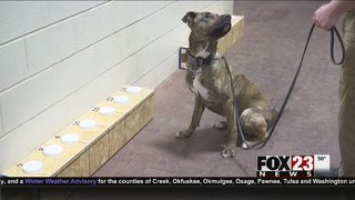 Shelter dog graduates to Oklahoma K9 officer