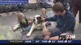 VIDEO: Therapy dogs coming to Tulsa International Airport