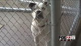 VIDEO: City of Tulsa works to improve animal control