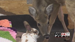 "Claremore ranch pairs real life ""Bambi and Thumper"" in physical therapy"