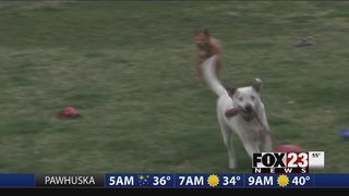 VIDEO: Local nonprofit searching for pet foster parents