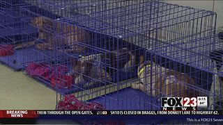 Oklahoma animal agencies open temporary shelter for pets