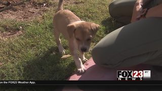 Puppy recovering after being found in trash truck